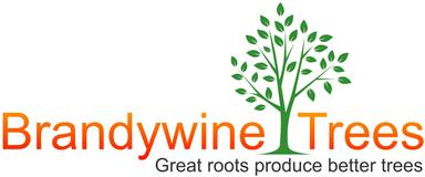 Brandywine Trees
